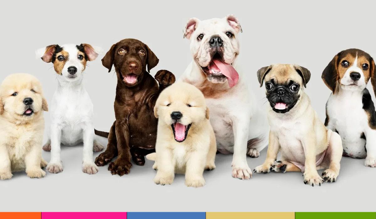 Razas de perros pequeños: ideales para vivir en apartamentos