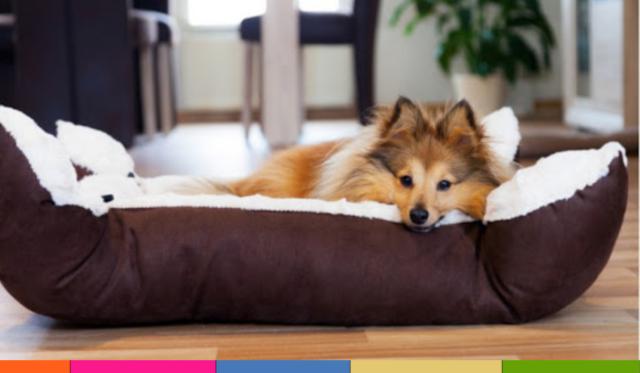 Camas para perros: cómo elegir la adecuada