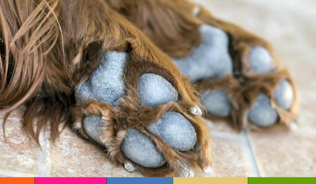 ¿Cómo cuidar las almohadillas en las patas de los perros?