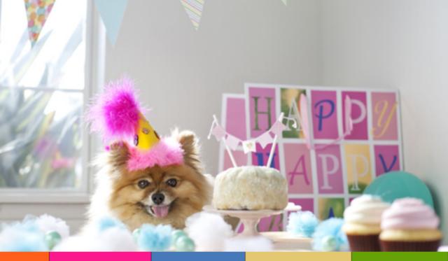 Fiesta para perros: cómo organizarla